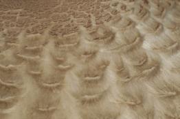mushroom_waves2