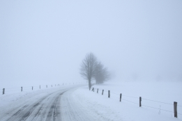 sneeuwbane