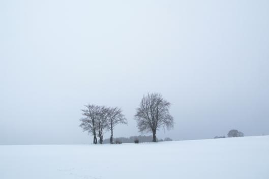 sneeuwbomen8