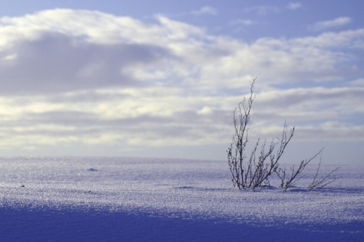 Zwalm_sneeuwlandschap