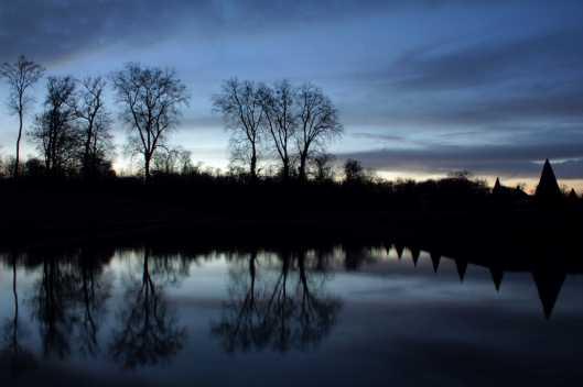 treeflection@fontainebleau3