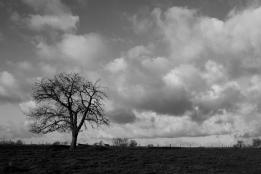 asymtree