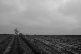 boom_in_de_weg