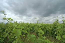 wijngaard Loire